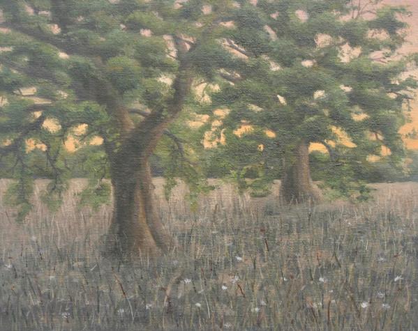 Evening Tree Study