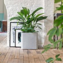 Decoratieve planten