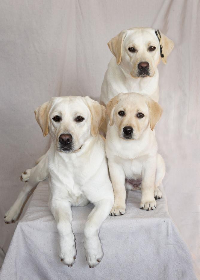 3-litters-of-Daisy's-babies.jpg