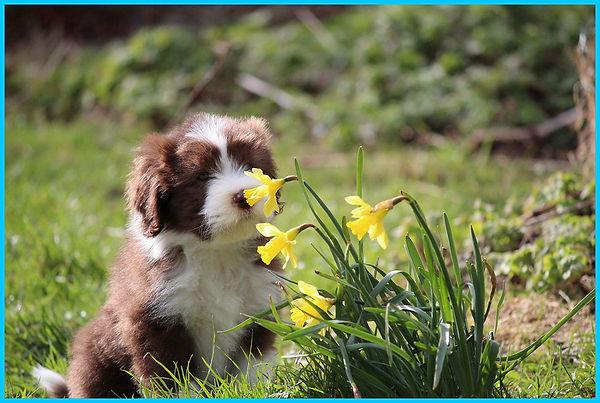 puppypage.jpg