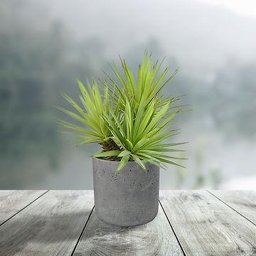 Mini Spiky Agave.jpg