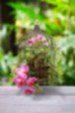 Orchid Fern Hanging.jpg