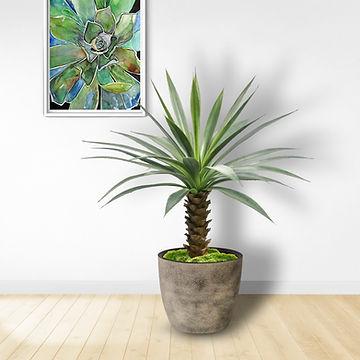 Giant Spiky Agave.jpg