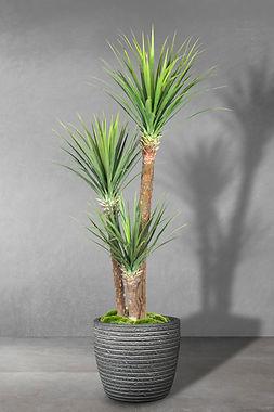 Yucca x 3.jpg