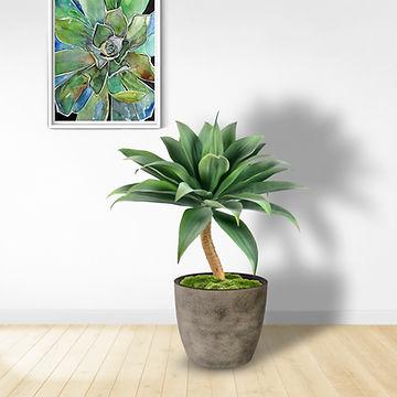 Giant Agave.jpg