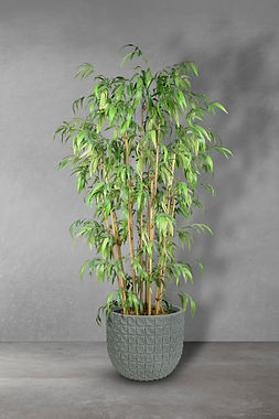 Bamboo Deluxe.jpg