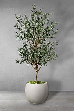Olive wild tree.jpg