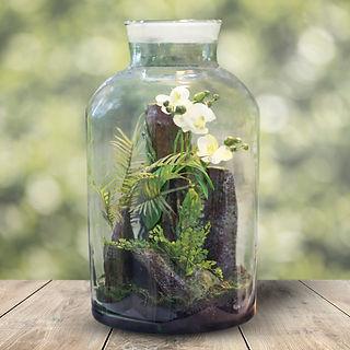 Orchid Terrarium.jpg