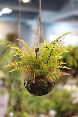 Hanging Fern Basket.jpg