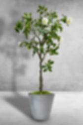 Camellia plastic trunk.jpg