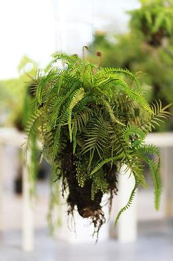 Small Ferns Mixed.jpg