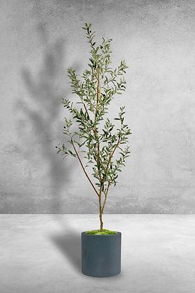 olive slim tree.jpg