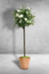 Diamond Rose Tree.jpg