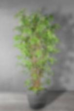 Japanese Bamboo Wild.jpg