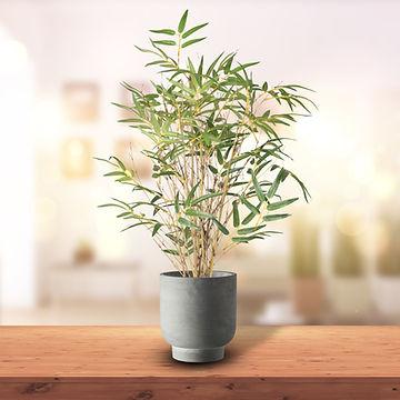 Japanese Bamboo table tree.jpg