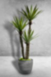 Spiky AgaveTree x 3.jpg