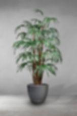 Lady Palm.jpg