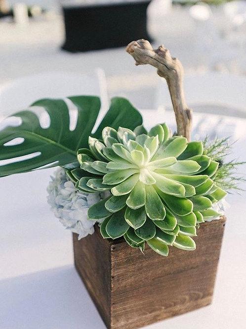Oh my Succulent