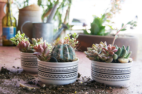 Succulent of the Month Club
