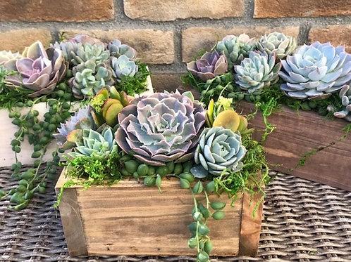 Succulent Boxed Love