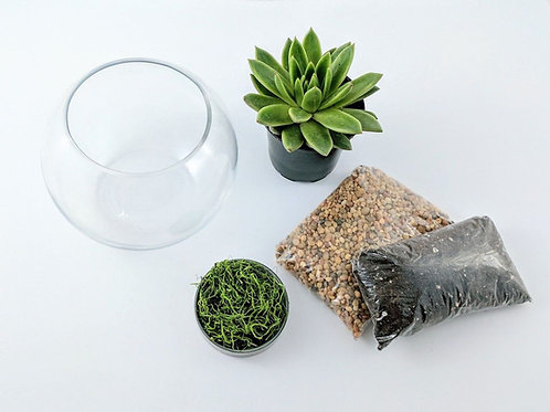 Mini Terrarium DIY Bowl