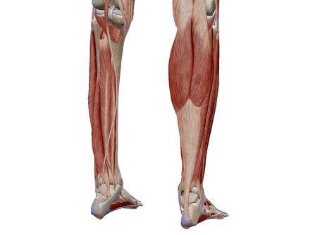 The forgotten muscles of the calf....