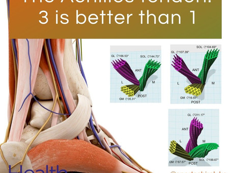 The Achilles tendon: 3 is better than 1