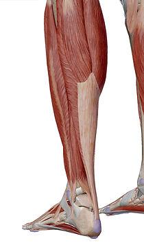 Achilles tendon.jpg