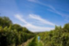 naturaleza, viñedos y tabernas en los alrededores de viena