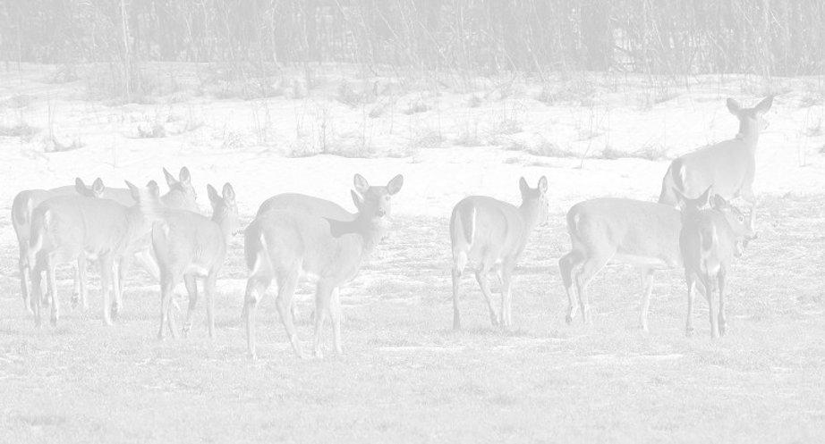 whitetaileddeer-3_edited.jpg