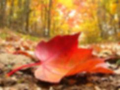 desktop-wallpaper-gallery-nature-autumn-