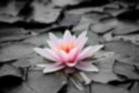 water-lily-1510707_640.jpg