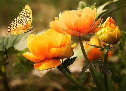 B -  Larisa Koshkina from Pixabay.jpg