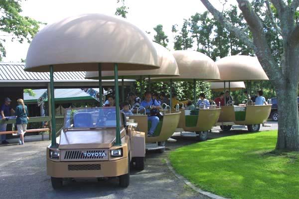 Kiwi Fruit Cart Tour