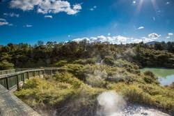 Te Puia Kiwi and Nature (5)