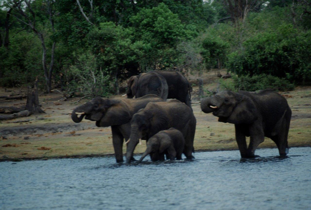 Chobe Game Park