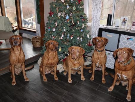 Family dog's