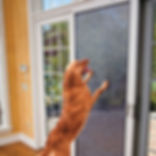 Onsite Window Screen Repairs, Custom Screens, Sliding Door Screens, Fast Service, Competative Prices. Serving Colorado Springs And Southern Denver.