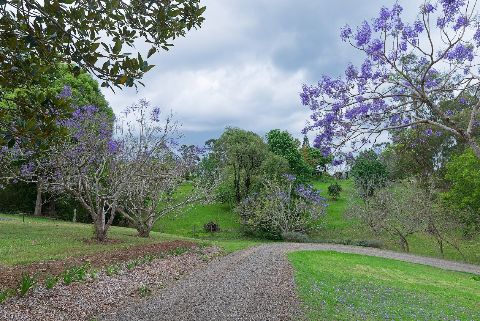 Jacaranda_Cottages_Maleny_Views_14