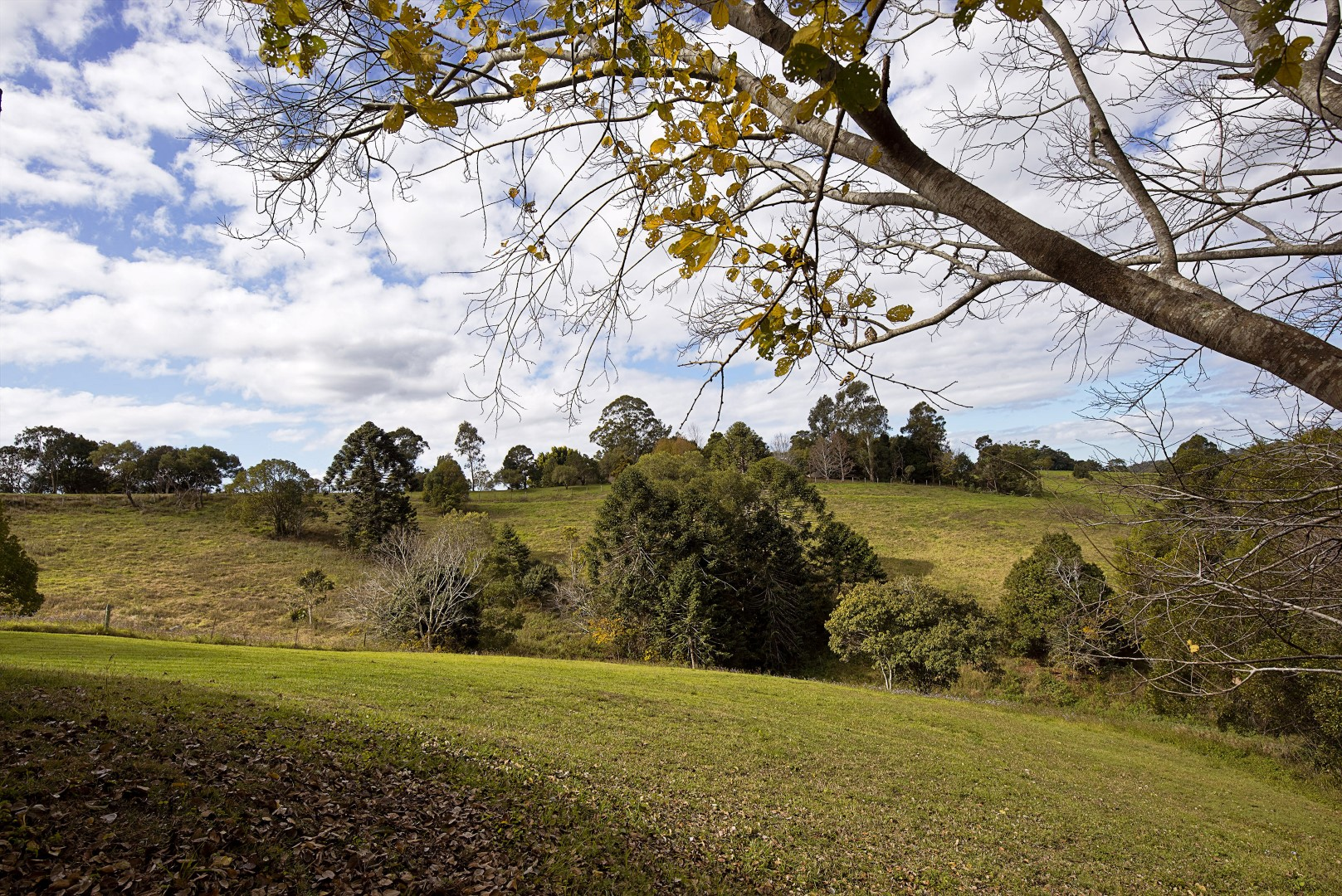 Jacaranda_Cottages_Maleny_Views_6