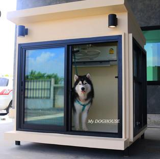 บ้านหมาสำเร็จรูป.jpg