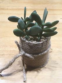 décoration - plante