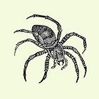 creepy - spider.jpg