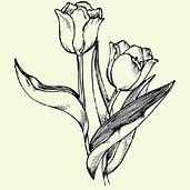 bulb show-tulip.jpg