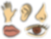five senses.png