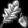 oak and acorn.png