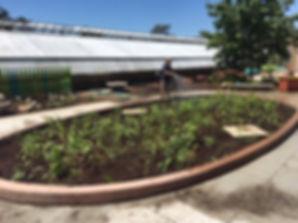 Planting being watered in.jpg