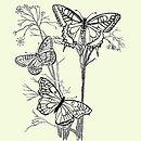 butterfly planters.jpg