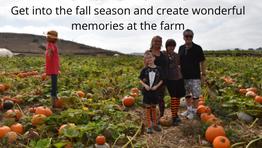 It's Fall at Tanaka Farms - Creating memories at the 2020 Pumpkin Farm