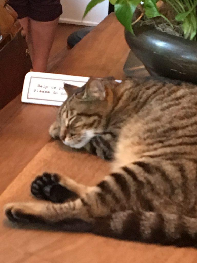 Famous 6-toed Hemingway cat